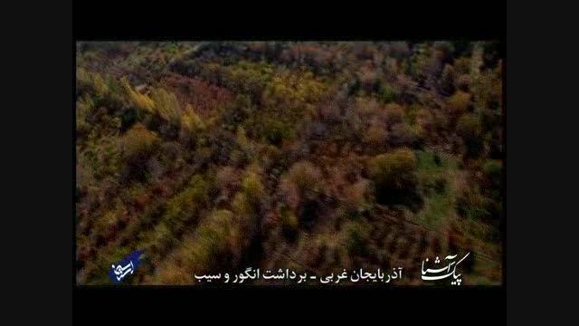 پیک آشنا (آذربایجان غربی - برداشت انگور و سیب)