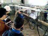 بازدید دانش آموزان از گاوداری صنعتی