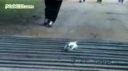 دنیای عجیب حیوانات قسمت1