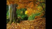 برگ پاییزی.....  خیلی زیباست