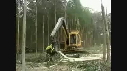 قطع بی رحمانه درختان جنگل