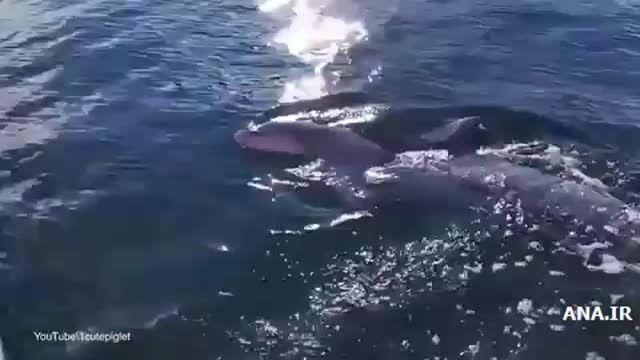 حمله دلفین گرسنه برای خوردن دوربین فیلم برداری