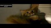 گربه vs جارو برقی :)
