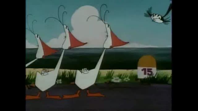 همه چیز درباره واتو واتو، پرنده اعجاب انگیز