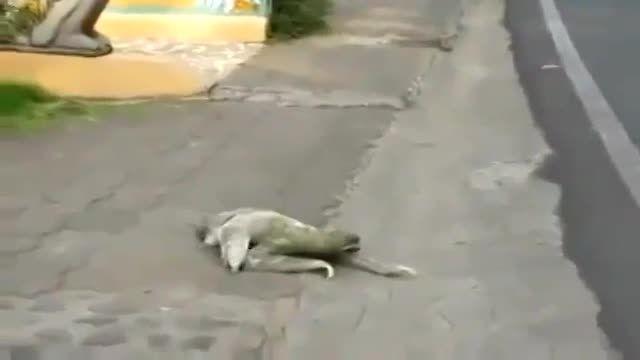 کمک به حیوونی که نمیدونم چیه !!