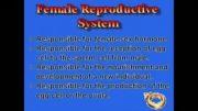 بیولوژی تولید مثل انسان  دستگاه تولید مثل زن