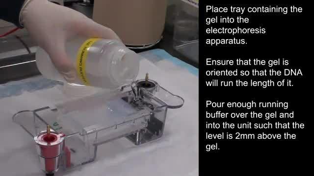آموزش نحوه انجام ژل الکتروفورز