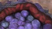 چگونگی تولید انسولین و دیبابت نوع 1