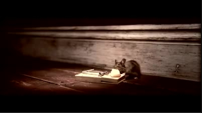 تله موش