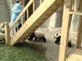 تاب و سرسره بازی پاندا کوچولوهای شیطون!