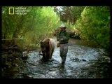 مستند سفر به دنیای وحش-پروژه کودیاک-National Geographic Expedition Wild(NGFarsi.com)