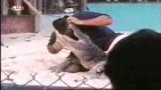 نجات معجزه اسای مرد از دست تمساح