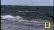 شکار سیر دریایی توسط وال در ساحل (باور نکردنی)
