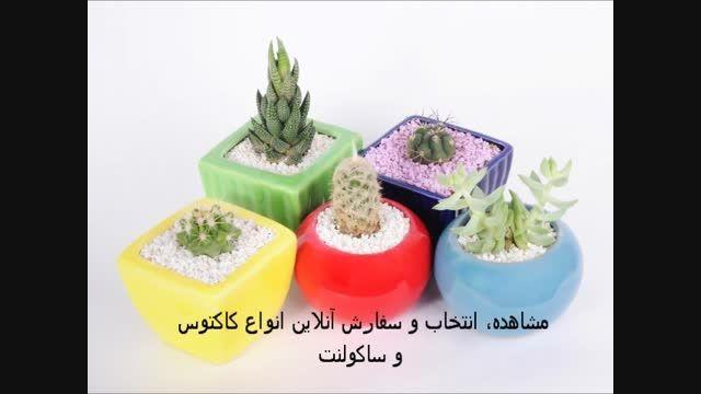 فروش ویژه و سفارشی گل و گلدان های کاکتوس و ساکولنت