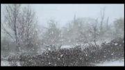 بارش برف بهاری در شهر هشجین
