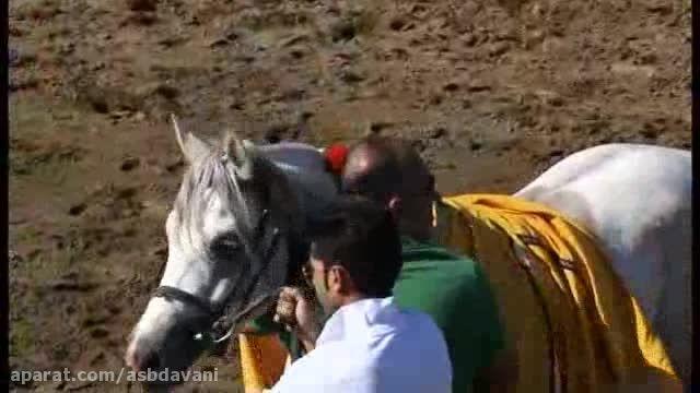 هفته سوم مسابقات کورس اسبدوانی ویژه اسب عرب تهران 1394