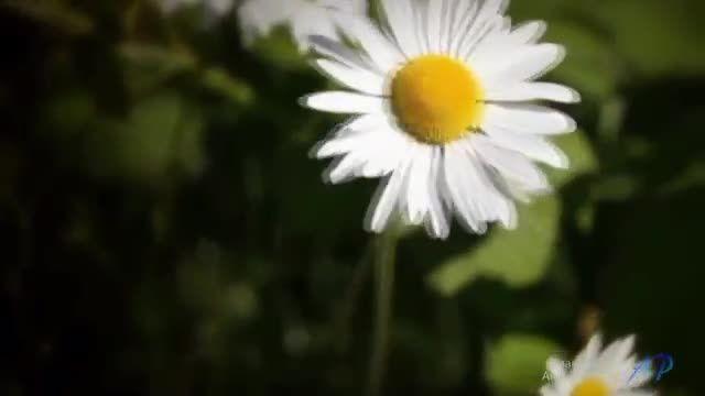 آهنگ احساسی زیبا از عمر اکرم: Angel of Hope(فرشته امید)