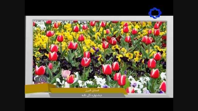 جشنواره گل لاله در استان البرز