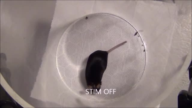 آزمایش  تحریک مغز موش به وسیله شارژر وایرلس