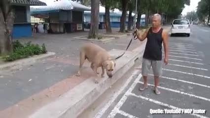 دفاع گربه ازبچه در مقابل سگ