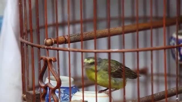 بازار پرندگان هنگ کنگ