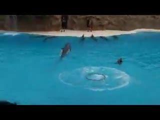 باهوش ترین و زیبا ترین دلفین های دنیا+نمایش شگفت انگیز