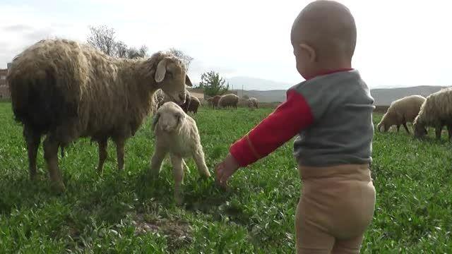 گوسفند و بره اش و بره کوچولوی خودم-رهایی بچه در طبیعت