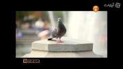 متن خوانی آزاده صمدی و مرغک زیبا با صدای محمد نوری