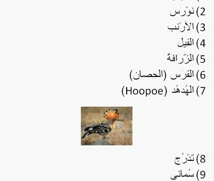 Learn MSA Arabic Language - Animals
