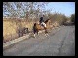 اسب دره شوری- شکار کره سالار