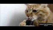 ته خنده.گربه vs جارو برقی :)