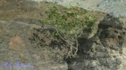 طبیعت منطقه آدوری در شهرستان بم