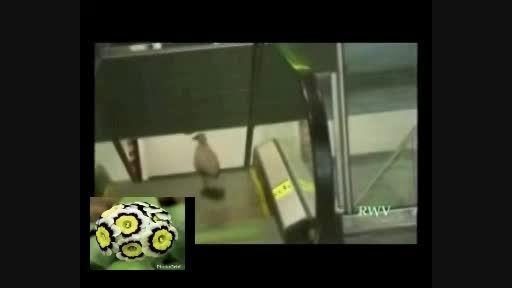 فوق طنز پرنده روی پله برقی