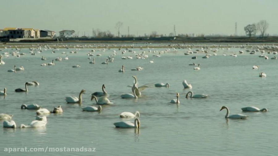 پرندگان مهاجر سیبری - سرخ رود