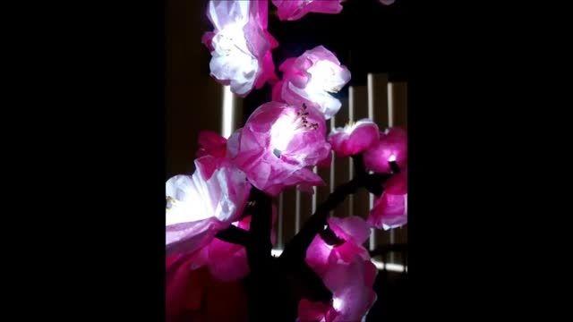 چراغ خواب با شکوفه های گیلاس