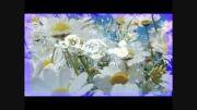 ترانه  بندری شاد شاد  ارین با اجرای مستر ژرمن