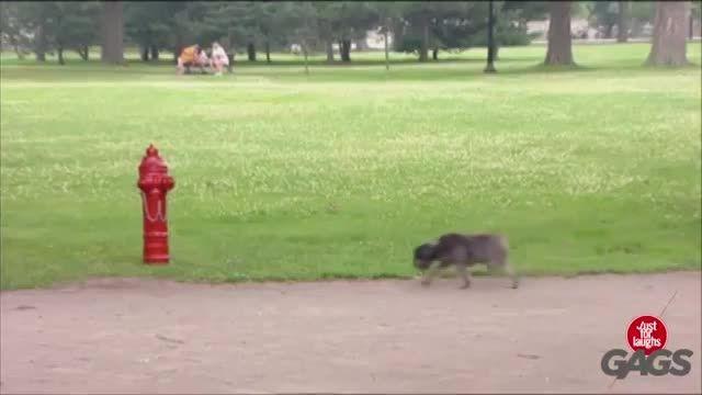 کلیپ بشدت خنده دار دوربین مخفی سگ آزاری