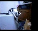 کلیپ بسیار زیبا از دعوا دو گربه بر سر گربه ماده