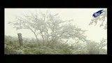 مستند جنگل ابر