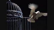 تصنیف آزادی / آهنگ: محمدرضا کاکاوند، خواننده:مجید یزدی