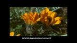 کلیپ رشد گیاهان