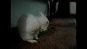 تمیز ترین خرگوش دنیا