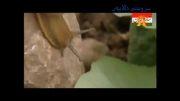 حه یرانی کوردی - سروشتی کوردستان