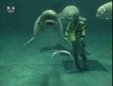 کلیپ جالب ازیک دلفین که حباب از دهان خود به بیرون میدمد.حتما نگاه کنید....