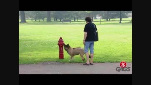 کلیپ بشدت خنده دار دوربین مخفی اذیت کردن سگ های بیچاره