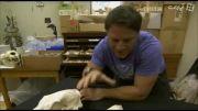 مستند 60 جانور خطرناک با دوبله فارسی - قسمت دوم