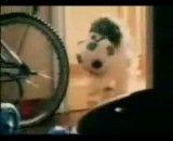 سگ بازیگوش ودوست داشتنی