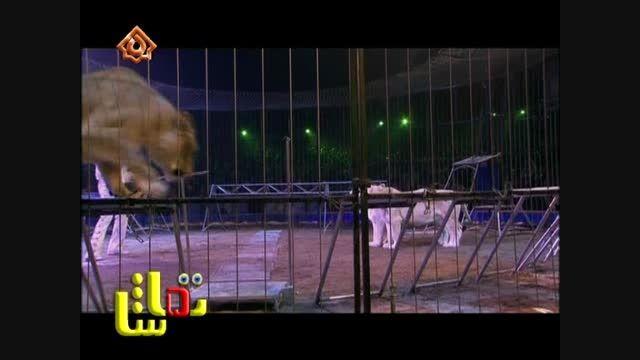 او هنرمند سیرک است و هم رام کننده شیرها
