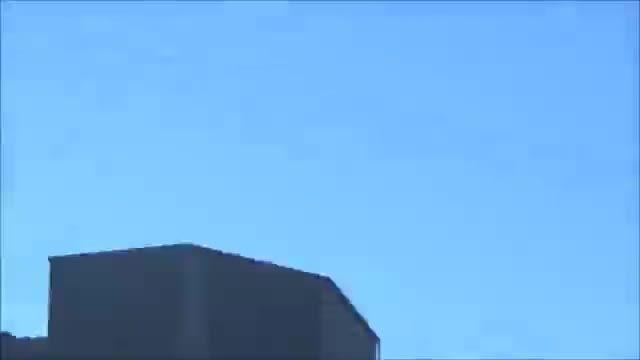 پرواز زیبای طوطی ها در طبیعت