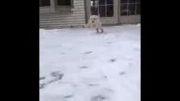 سگ نمکیه دوست داشتنی